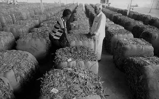 5 Indian Stocks Into Tobacco
