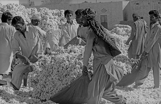 5 Pakistani Stocks Into Cotton