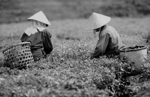 5 Vietnamese Stocks Into Tea